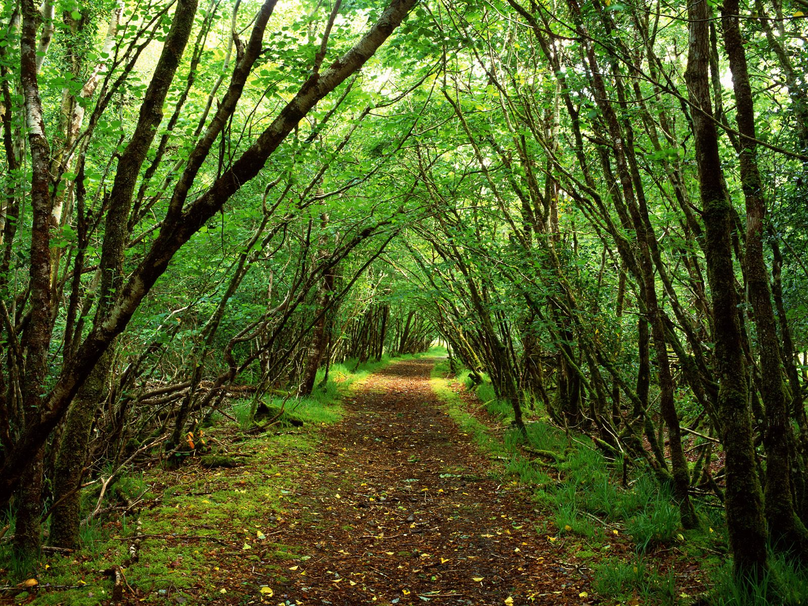 Rossacroo-na-loo Wood Near Kilgarvan County Kerry Ireland