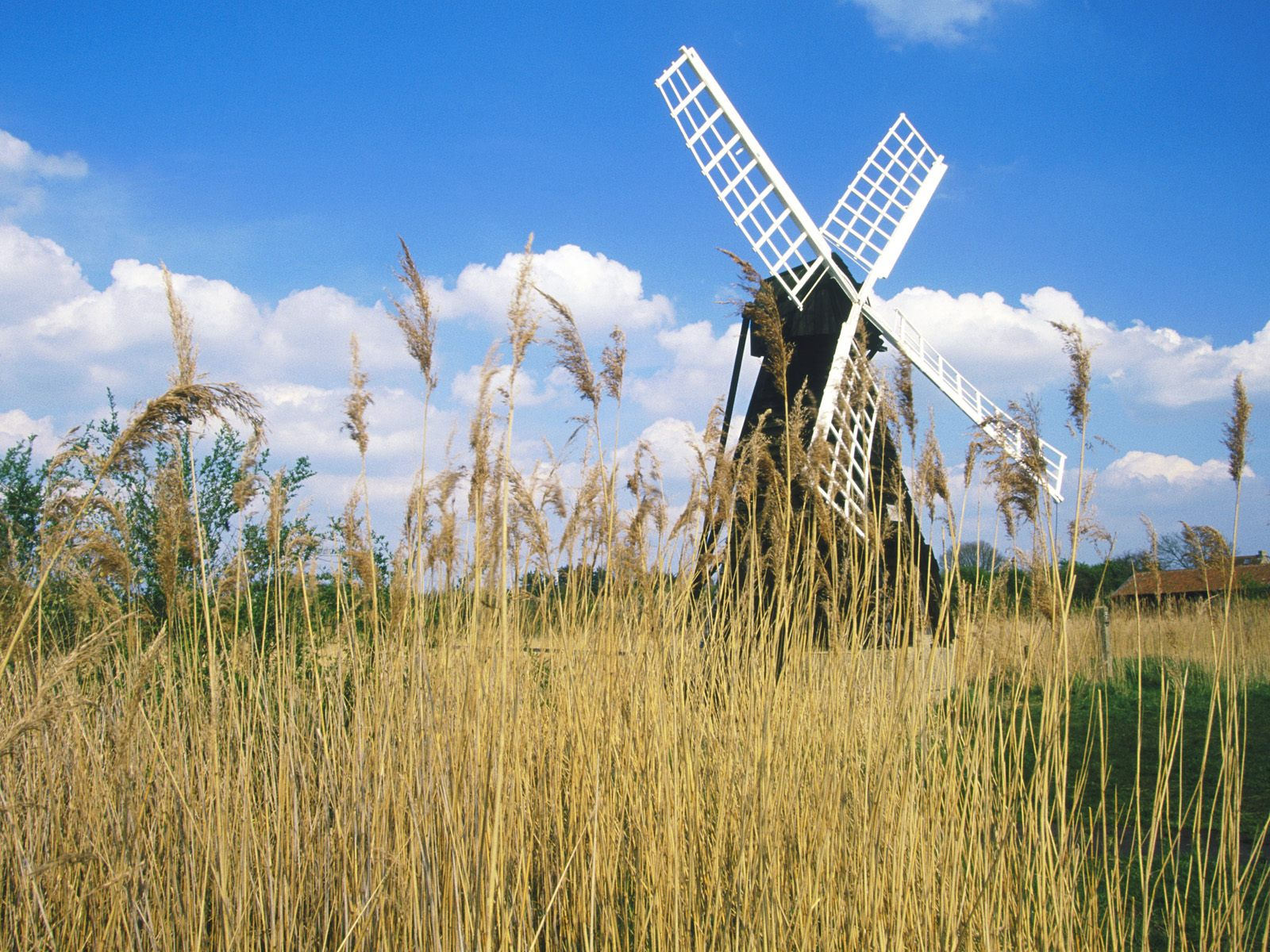 Wicken Fen Windmill Cambridgeshire United Kingdom