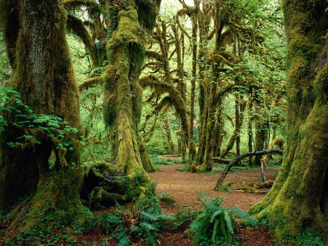 Hall of Mosses Olympic National Park Washington