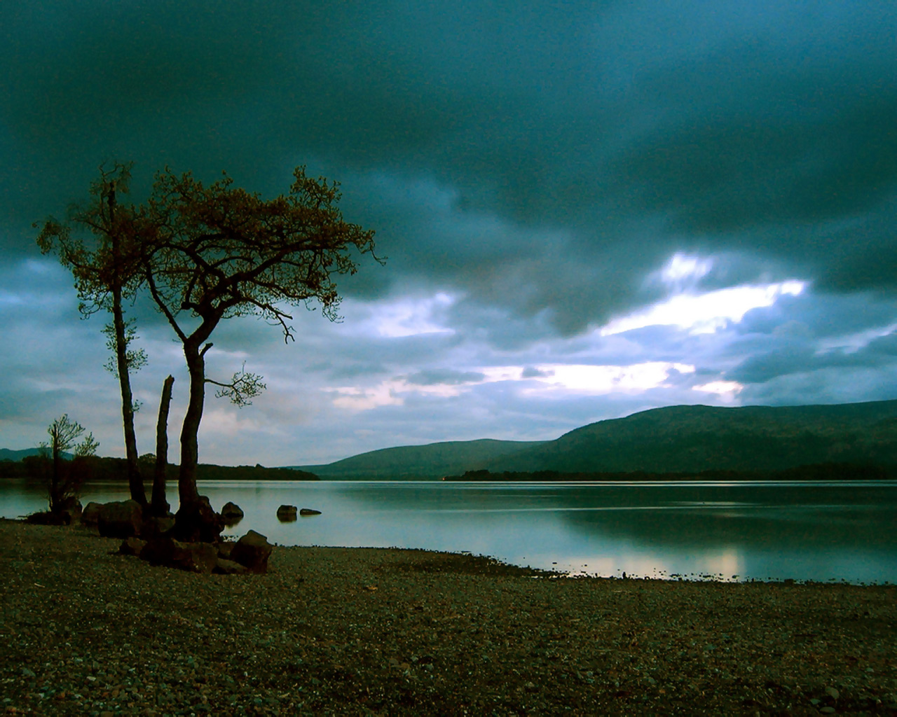 solitarytree Scotland