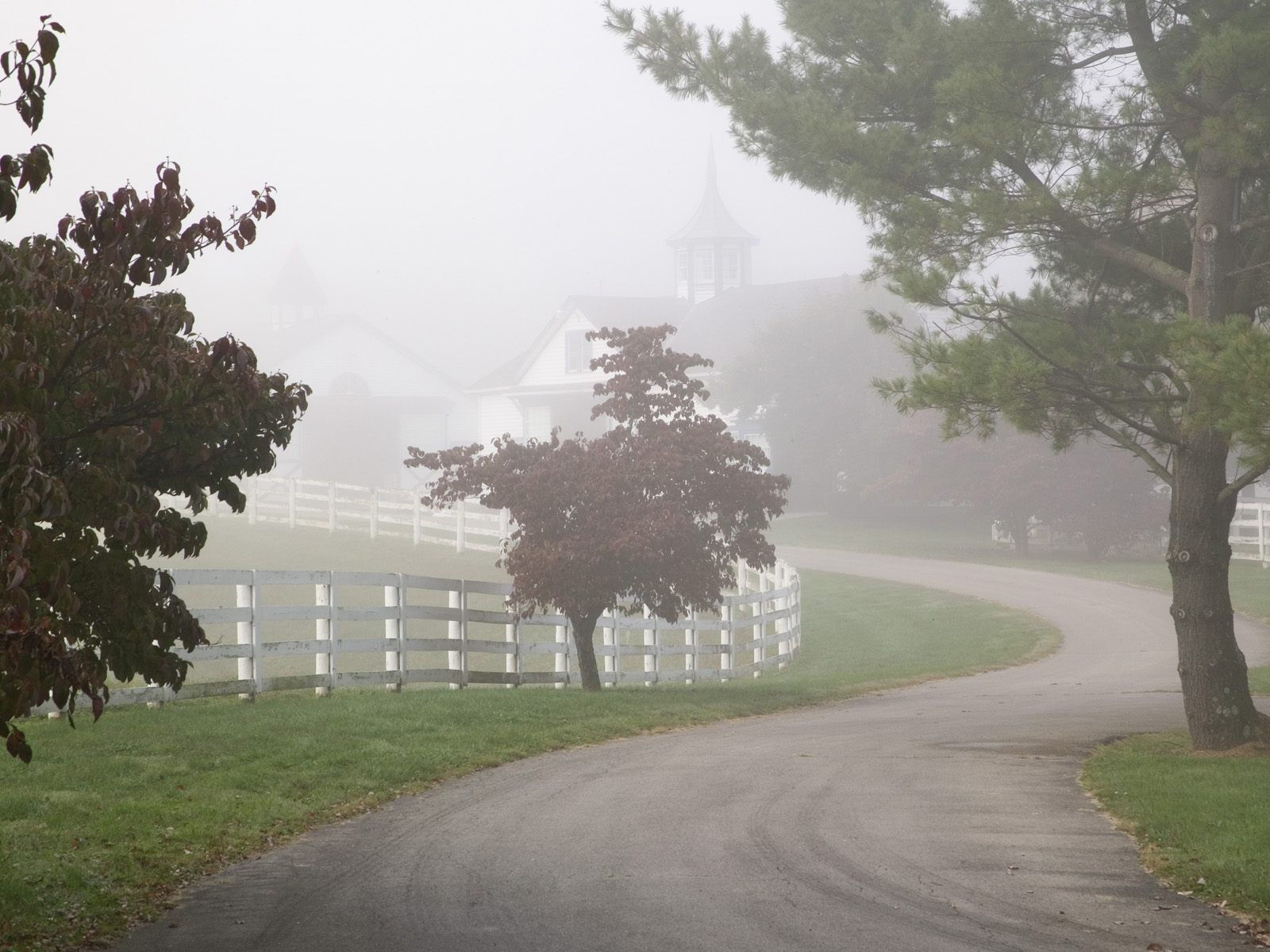Manchester Horse Farm on a Foggy Morning Lexington Kentucky