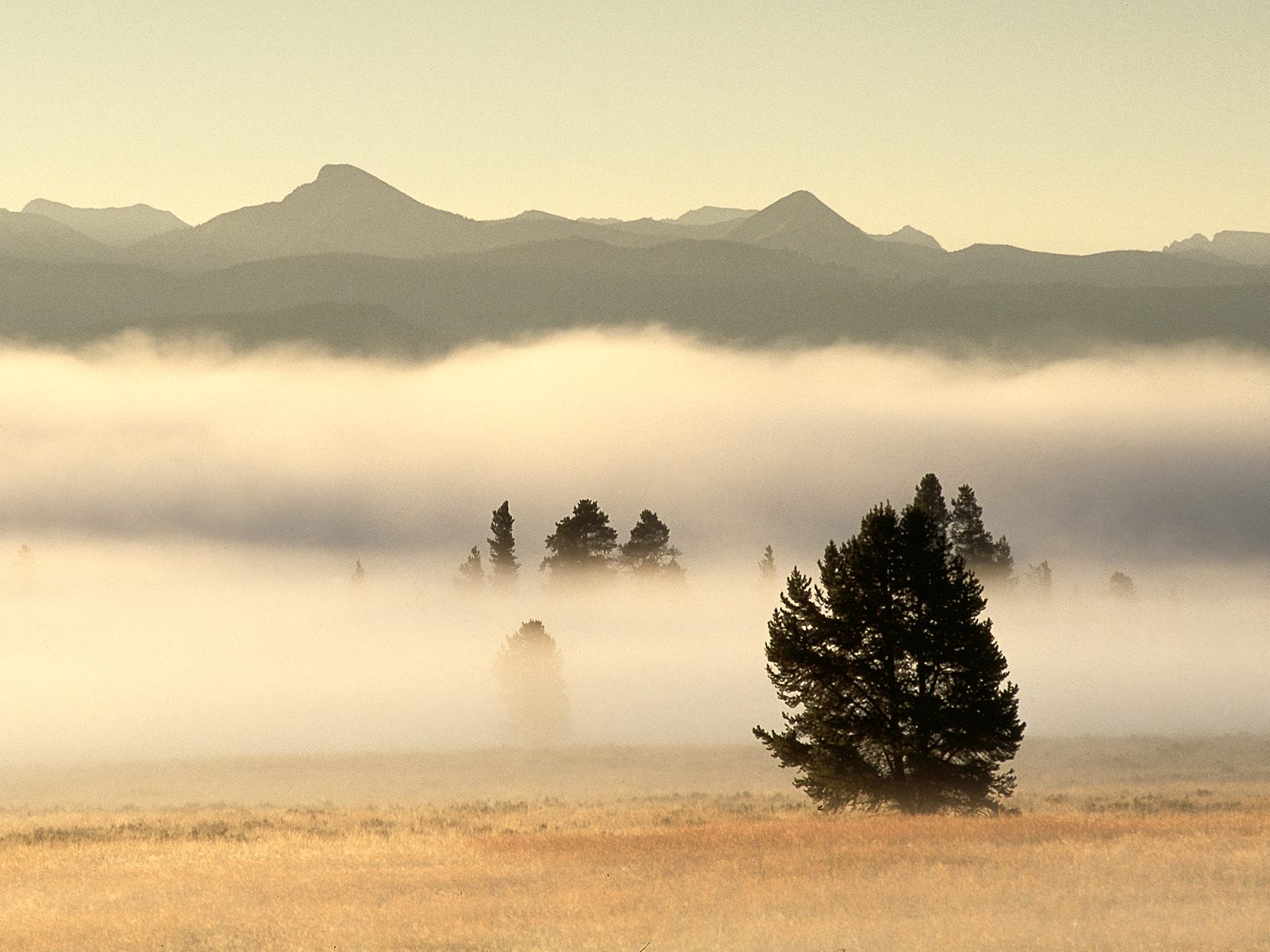 Fog at Sunrise Pelican Valley Yellowstone National Park Wyoming