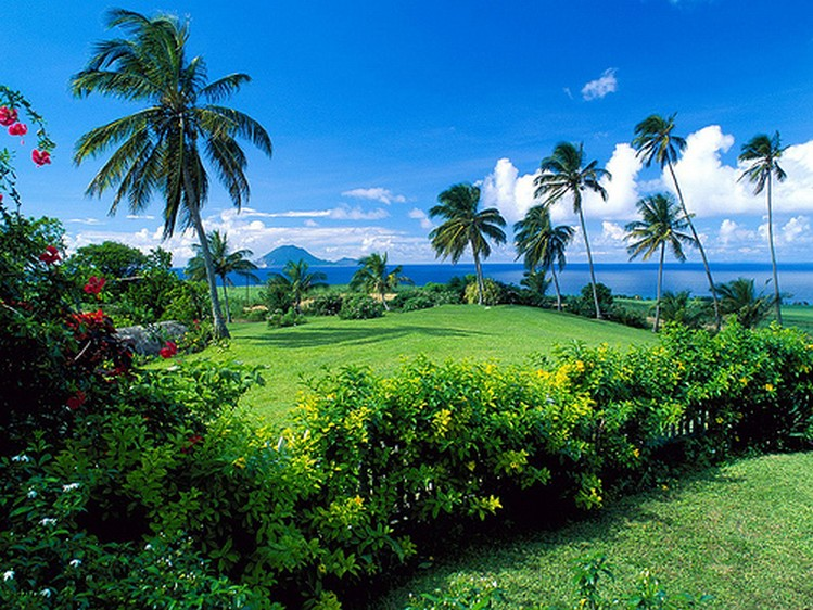 saint kitts and nevis garden
