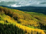 Aspen Forest in Early Fall Ohio Pass Gunnison National Forest Colorado