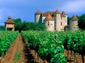 Vineyard Cahors Lot Valley France