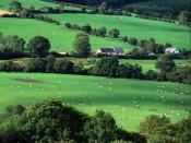 Fields and Farmhouses of County Cork Ireland