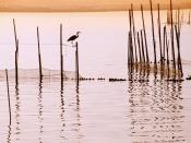 La Albufera National Park Spain