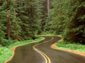 Lush Winding Road Olympic National Park Washington