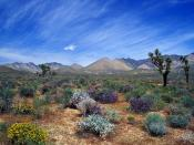Desert Bloom California Desert Conservation Are
