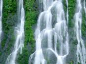 Gifford Pinchot National Forest Washington16
