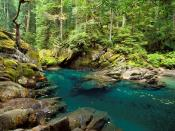 Ohanapecosh River Mt. Rainier National Park Wa