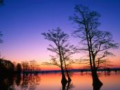 Bald Cypress Trees at Sunrise Reelfoot National Wildlife Refuge  Tennessee